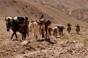 The mule train