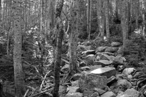 Typical trail terrain