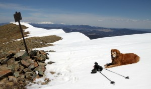 Rainier lounging on the summit of Mt. Walter