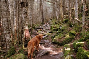 """I think Rainier helped Khumbu learn the ways of the """"trail dog"""". She sure can hike and scramble, that's for certain"""