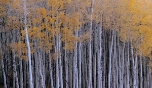 One of my very few Aspen pics this year