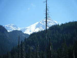 Point of Success and the Tahoma Glacier and headwall from around 3,000' on the Westside Road