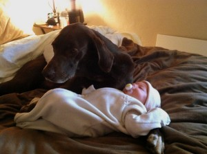 Kona being a good babysitter