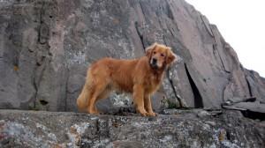 Rainie coming down the class 3 summit pitch on Wetterhorn Peak in 2004