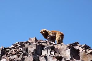 Rainie on the summit ridge
