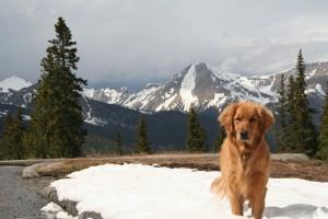 My buddy Lee Hoffman took this great pic of Rainie with Mt. Aetna behind
