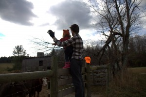 "Sawyer loved seeing the cows, aka ""moo moos"""