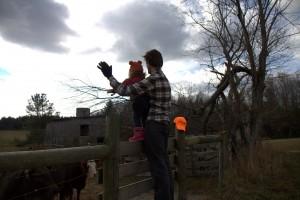 "Sawyer loved seeing the cows, aka ""moo moos"""