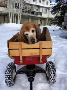 Kristine got this awesome 4wd Radio Flyer wagon for Rainie. She loves riding in it.